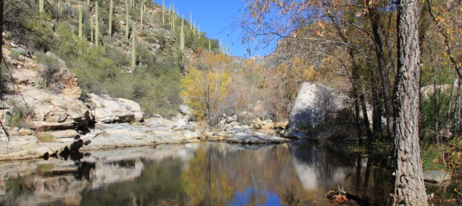 Do you know why Sabino Canyon is so special?